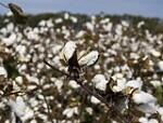 EU rejects Uzbekistan trade deal over child labour concerns