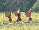 """Women in Nepal """"stolen"""" to boost male pride"""