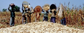 Government support could help women farmers ease Nigerian food shortages